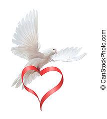 голубь, в, , воздух, with, wings, широкий, открытый