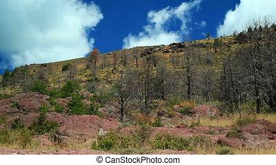 гора, лес, panorama.