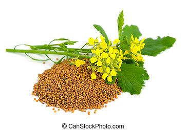горчичный, цветы, and, seed.