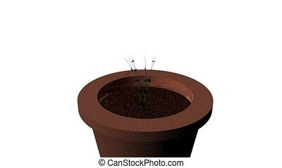 горшок, сад, выращивание, растение