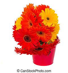 горшок, цветы, gerbera