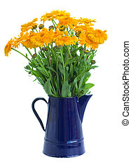 горшок, calendula, цветы