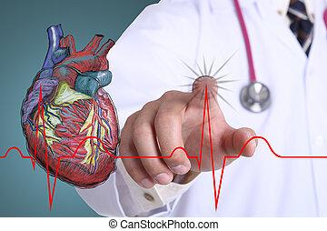 график, сердце, врач, трогать, бить
