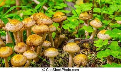 грибы, лес