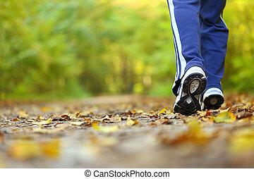 гулять пешком, женщина, страна, пересекать, осень, след, лес