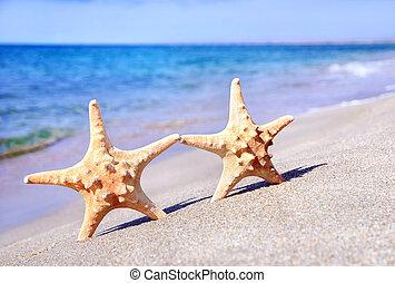 гулять пешком, концепция, sea-stars, -, два, против, песок, задний план, waves, день отдыха, пляж