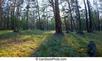 гулять пешком, лес