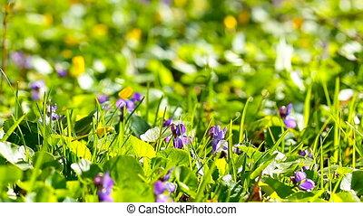 движение, задний план, slider., медленный, flowers., весна