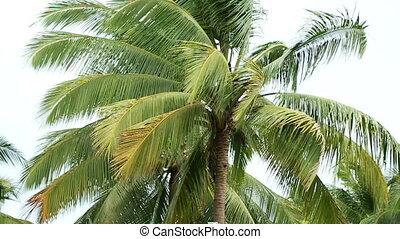 движение, кокос, медленный, растение