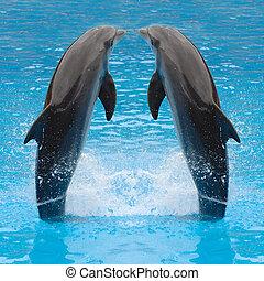 дельфин, двойняшки