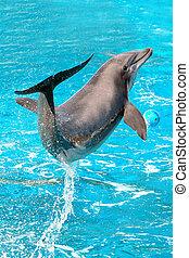 дельфин, игры