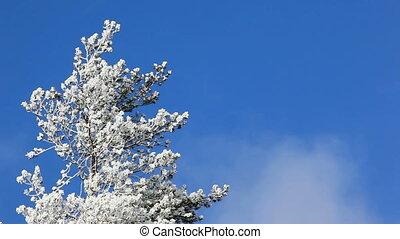 дерево, зима