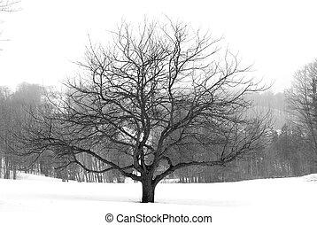 дерево, зима, яблоко