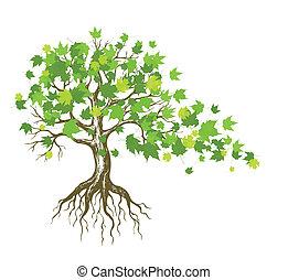 дерево, кленовый