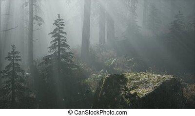 дерево, лес, туманный, весна, утро, сосна