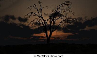 дерево, мертвый