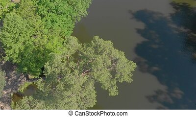дерево, над, воды, сосна