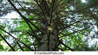 дерево, низкий, дикий, угол, перспективный, большой, ель