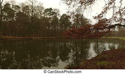 дерево, озеро, отражение