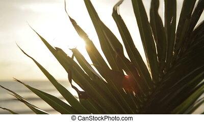 дерево, пальма, лист, вверх, закрыть