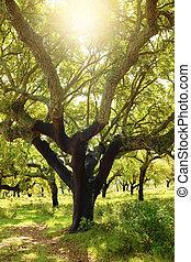 дерево, пробка
