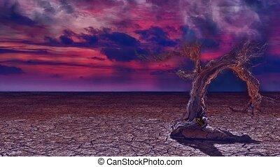 дерево, пустыня