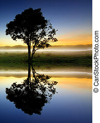 дерево, силуэт, отражение