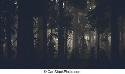 дерево, сосна, темно, лес, черный, хобот