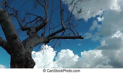 дерево, упущение, clouds, время