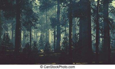 дерево, хобот, сосна, темно, черный, лес