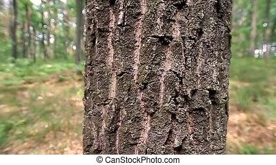 дерево, хобот