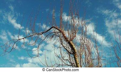 дерево, clouds