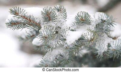 дерево, falling, вечнозеленый, снег