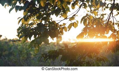 дерево, leaves, солнечно, background., зеленый, 4k, перемещение, небо