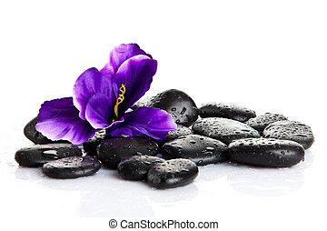 дзэн, базальт, камень, isolated, stones., спа