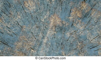 дикий, снежно, лес, красивая, антенна, зима