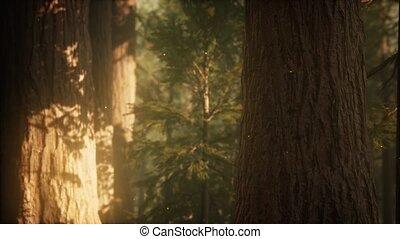 дикий, сосна, восход, лес