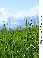 дикий, трава