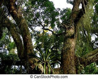 дождь, лес, амазонский, дерево
