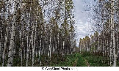 дорога, лес