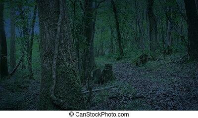 дорожка, лесистая местность, сумрак