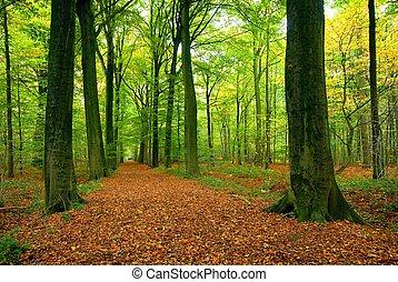 дорожка, пышный, лес, через