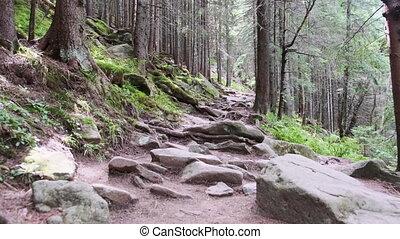 дорожка, скалистый, гора, forest., след, зеленый, плотный, ...