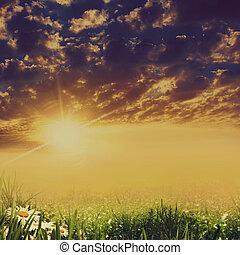 драматичный, пейзаж, with, красота, маргаритка, цветы
