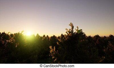 ель, над, марочный, выстрел, разрешающая способность, стиль, летающий, задний план, зеленый, природа, метраж, антенна, хвойное дерево, посмотреть, лес, 4k, treetops