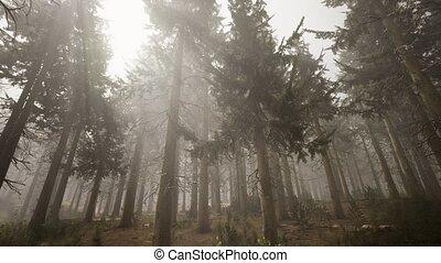 ель, натуральный, лес, sunbeams