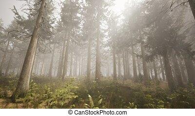 ель, sunbeams, лес, натуральный