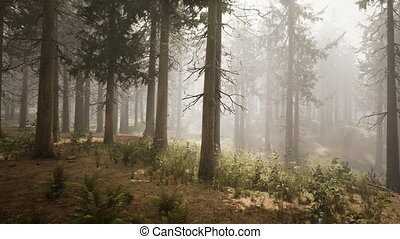 ель, sunbeams, натуральный, лес