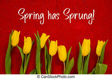 желтый, весна, has, текст, тюльпан, захмелевший, задний план, цветы, красный