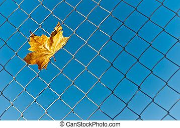 желтый, осень, падать, лист, пойманный, в, провод, меш